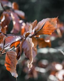Крупным планом вид с селективным фокусом на удивительную ветку дерева с оранжевыми листьями под солнечным светом