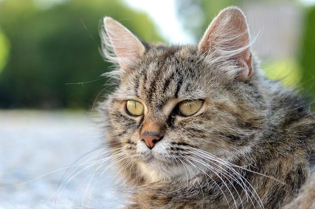 Colpo del primo piano di un adorabile gatto con gli occhi verdi