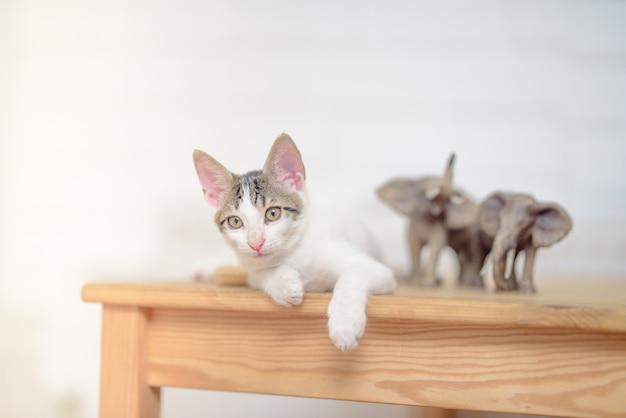 Colpo del primo piano di un adorabile piccolo gatto domestico sdraiato su un tavolo
