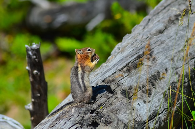 Closeup shot of an adorable squirrel on a tree