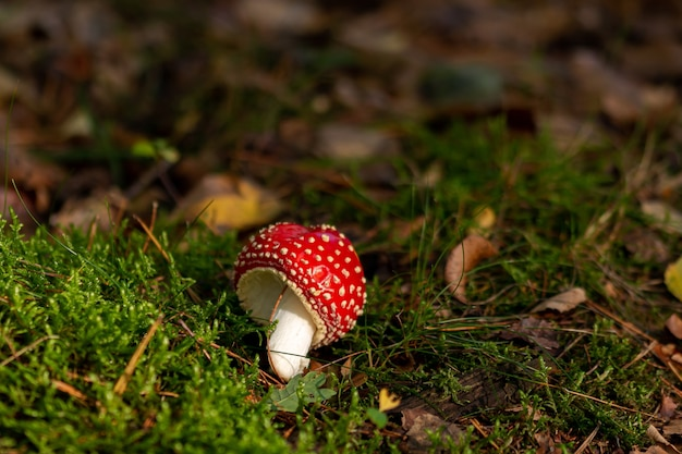 Closeup shot of an agaric mushroom surrounded by green plants
