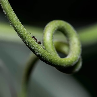 Closeup shot of an ant sitting on a green plant stem