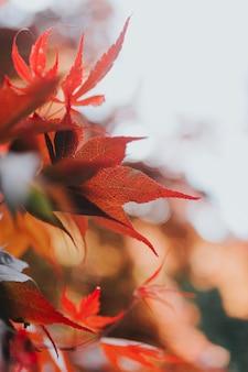 Colpo del primo piano di belle foglie di autunno su un albero