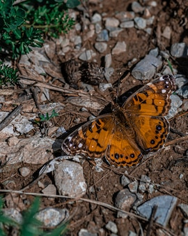 Closeup shot of a beautiful butterfly on the ground