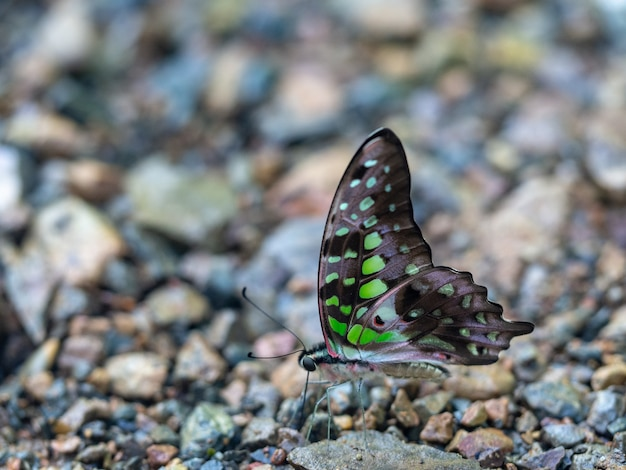 Closeup shot of a beautiful butterfly in nature