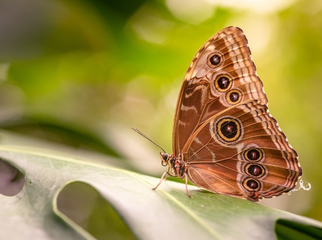 Closeup shot of a beautiful butterfly sitting on a green leaf