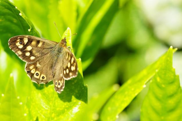 Colpo del primo piano di una bellissima farfalla seduta su una foglia verde