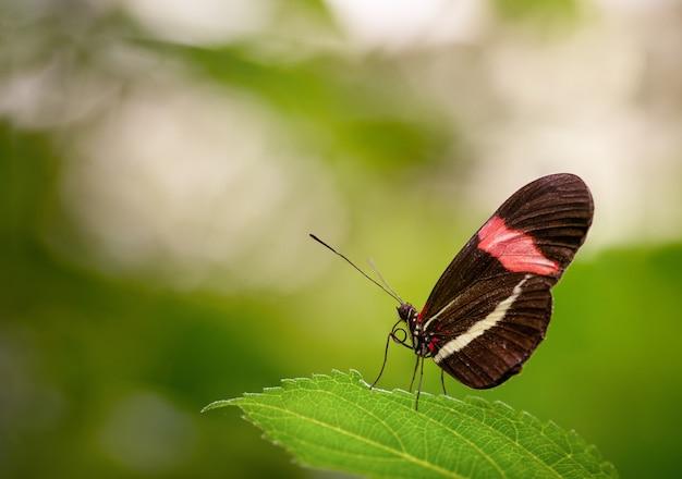 Primo piano di una bellissima farfalla posata su una foglia verde