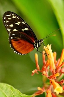 Closeup shot of a beautiful butterfly