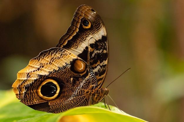 Colpo del primo piano di una bellissima farfalla