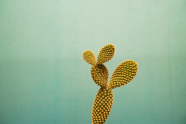 Closeup shot of beautiful cactus plants on a blue background