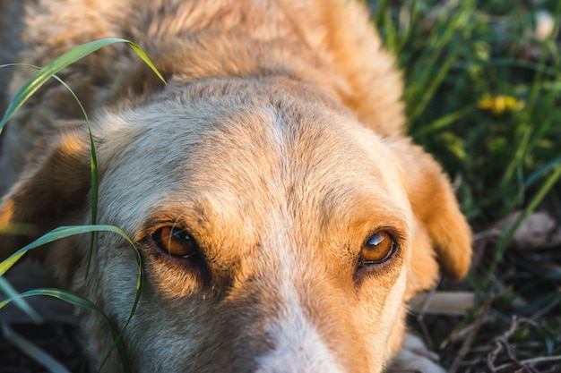 Closeup shot of a beautiful dog in a field while looking at the camera captured on a sunny day