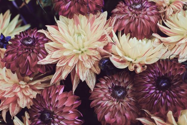 Colpo del primo piano di una bella composizione floreale con fiori colorati di dalia