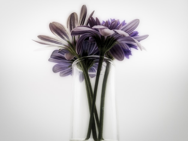 Colpo del primo piano di un mazzo di fiori bellissimi in un vaso di vetro isolato