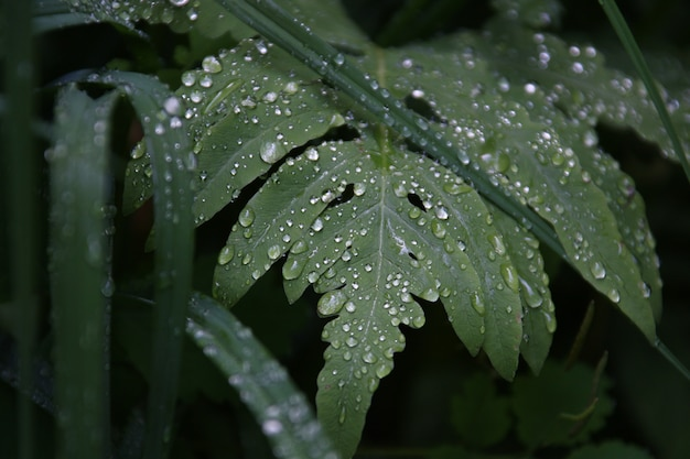 Closeup shot of a beautiful green leaf covered with dewdrops in the early morning
