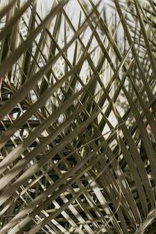 Colpo del primo piano di una bellissima vegetazione di una foresta per sfondo o carta da parati