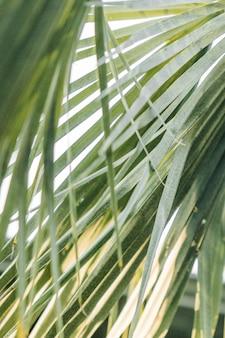 Colpo del primo piano di bella vegetazione di una foresta