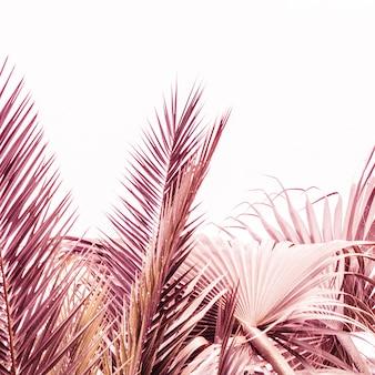 Primo piano di bellissime piante viola e rosa in un deserto