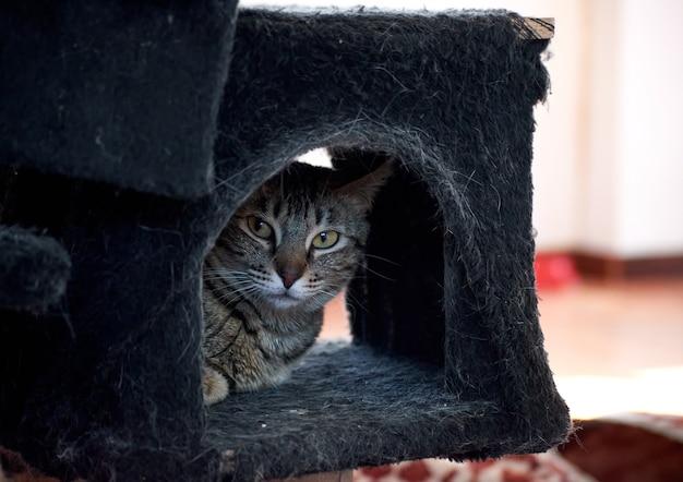 A closeup shot of a beautiful striped cat hiding in a bed
