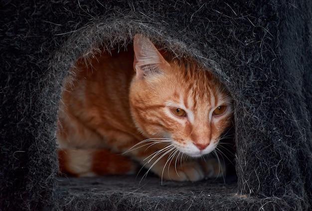 A closeup shot of a beautiful striped orange cat hiding in a bed