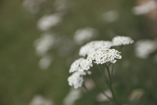 Closeup shot of beautiful white greenery in a forest with a blurred background
