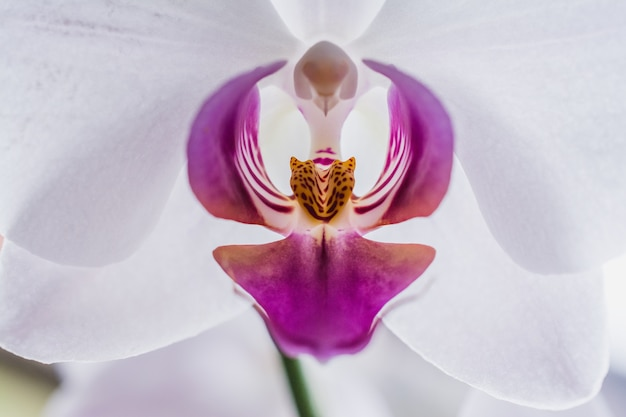 Closeup shot of a beautiful white and pink orchids