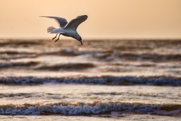 Closeup shot of a beautiful white seagull with spred wings flying above the ocean