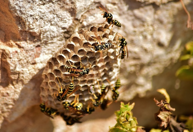 Closeup shot of bees on paper wasp nest