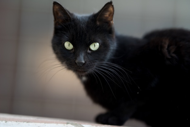 Closeup shot of a black cat calmly lying on the ground
