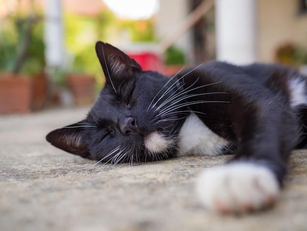 Closeup shot of a black cat sleeping on the ground