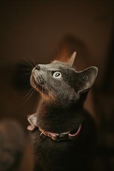 Colpo del primo piano di un gatto nero con gli occhi verdi