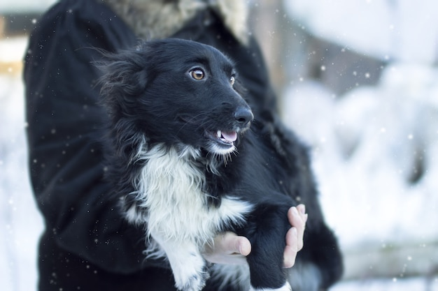 Closeup shot of a black dog underneath snowy weather looking sideways
