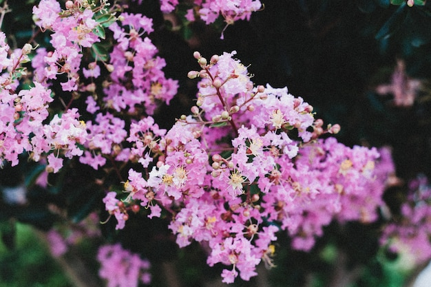 Colpo del primo piano di un ramo di piccoli fiori viola che crescono uno accanto all'altro