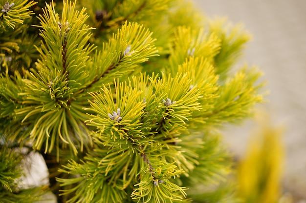 Colpo del primo piano dei rami di un albero che cresce durante il giorno
