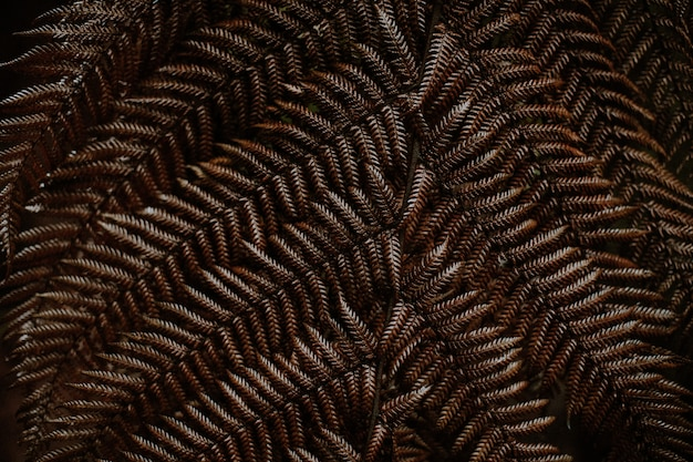 Closeup shot of a brown autumn fern leaves