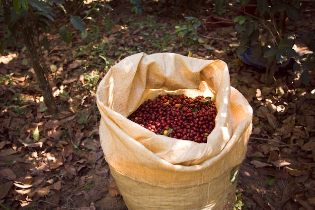 Closeup shot of a brown bag with red coffee beans in it