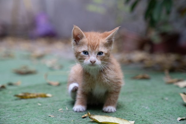 Closeup shot of a brown kitten on the ground