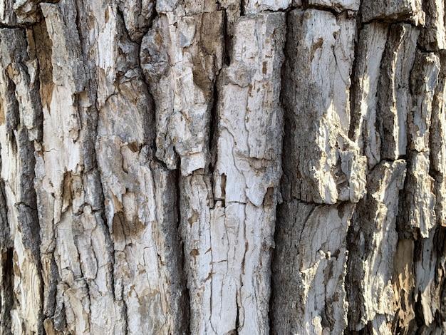 Colpo del primo piano della corteccia di albero marrone con la luce solare che cade su di esso - perfetto per gli sfondi naturali