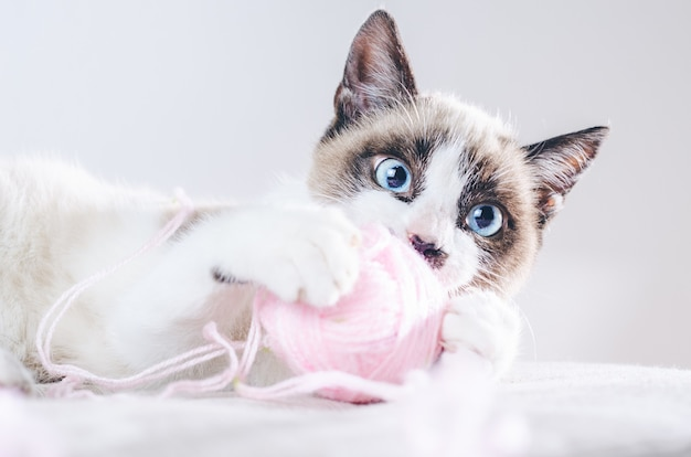 Closeup shot of the brown and white face of a cute blue-eyed cat playing with a ball of wool