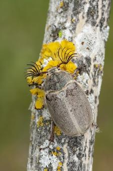 Colpo del primo piano del bug con diverse antenne sull'albero