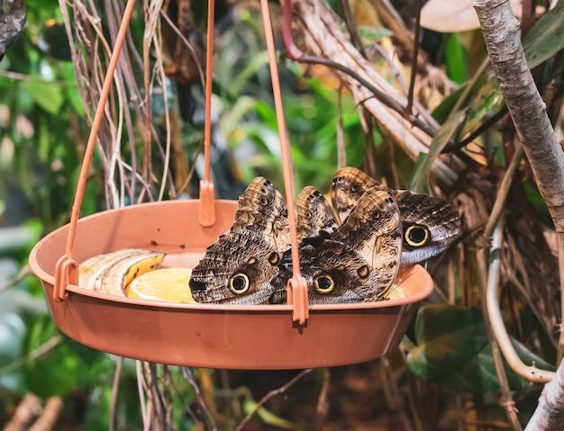 Colpo del primo piano delle farfalle in una pentola di terracotta