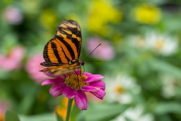 Colpo del primo piano di una farfalla su un bel fiore viola