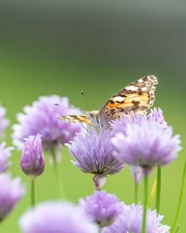 Primo piano di una farfalla su un bellissimo fiore viola