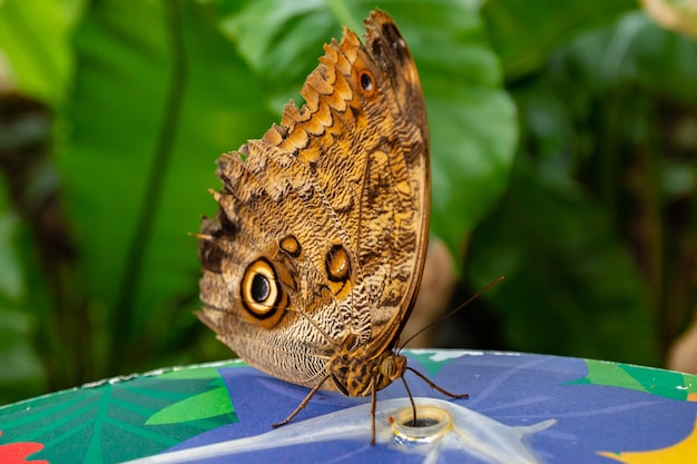 Closeup shot of a butterfly on a blurred background