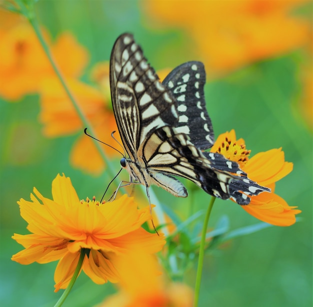 Closeup shot of a butterfly on a bright orange flower with blurred background
