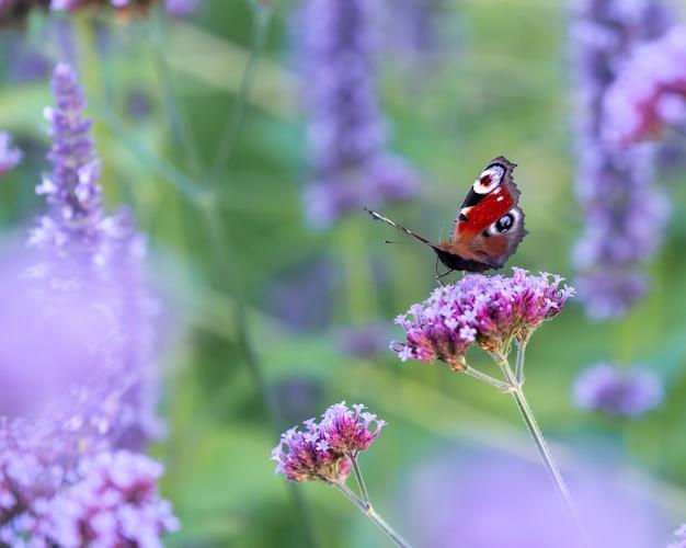 Colpo del primo piano di una farfalla su un fiore sotto la luce