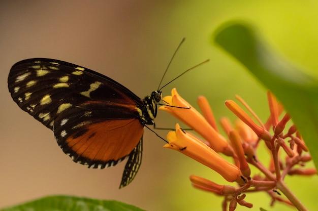Colpo del primo piano di una farfalla seduta su un fiore con uno sfondo sfocato