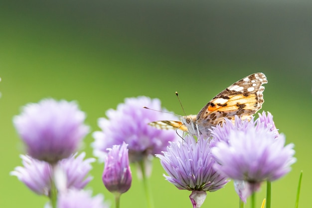 Closeup shot of a butterfly sitting on a purple flower
