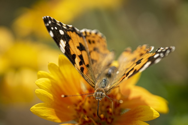 Closeup shot of a butterfly on a yellow flower