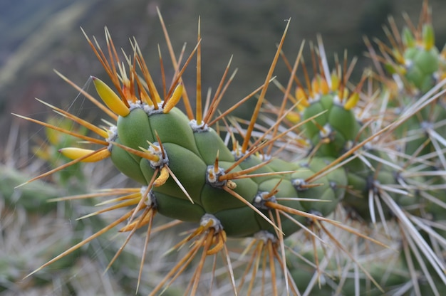 Closeup shot of a cactus with big spikes